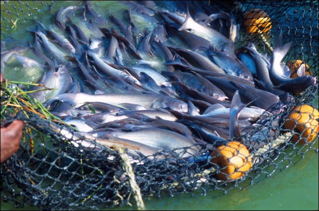 O ômega 3 e outros peixes são ótimos na dieta mediterrânea!