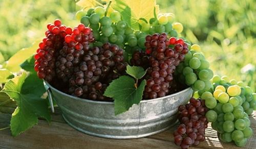A uva é uma fruta cheia de benefícios.